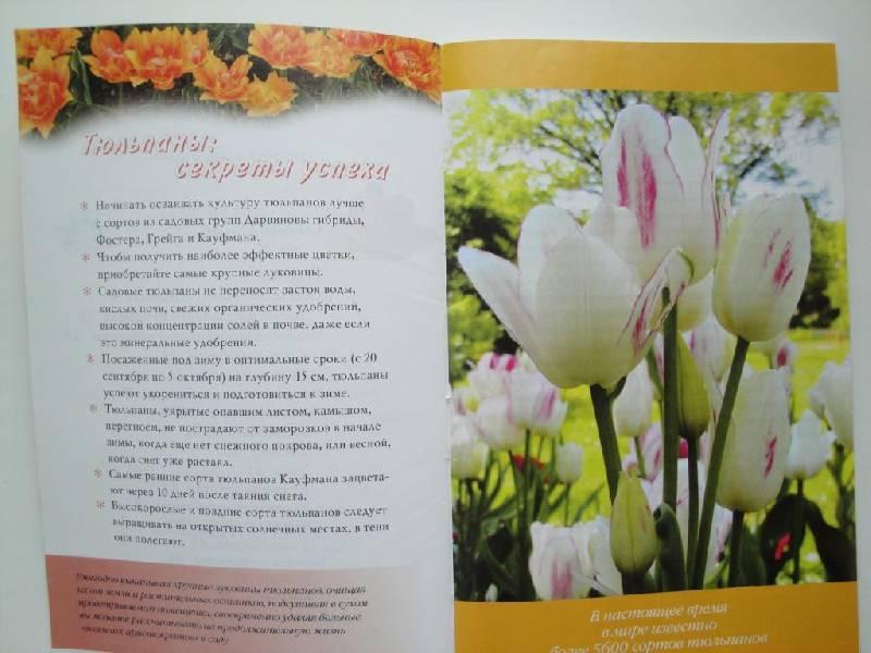 Иллюстрация 1 из 7 для Тюльпаны - Нина Данилина | Лабиринт - книги. Источник: karina_pavlovna