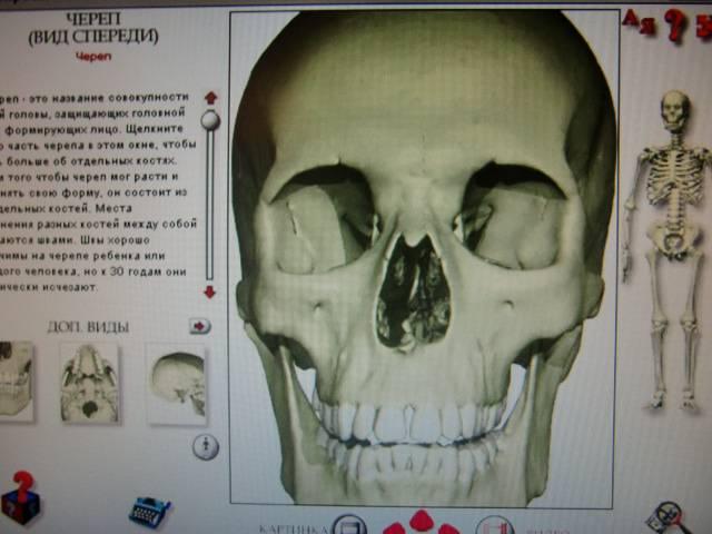 Иллюстрация 1 из 3 для Секреты твоего скелета (CDpc) | Лабиринт - софт. Источник: Лимпи