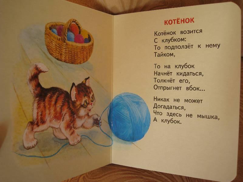 Стихи к подарку кошек 783