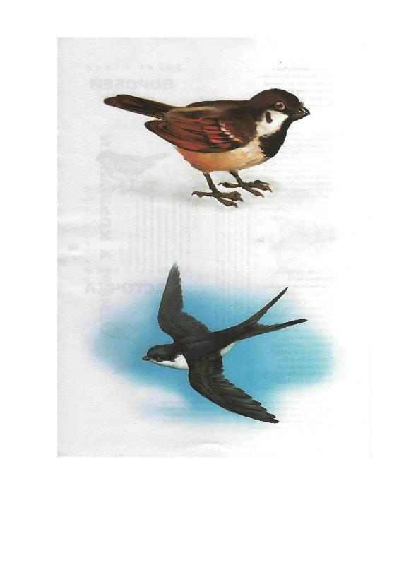 """Домашние и дикие птицы средней полосы """", фотография, изображение, картинка."""