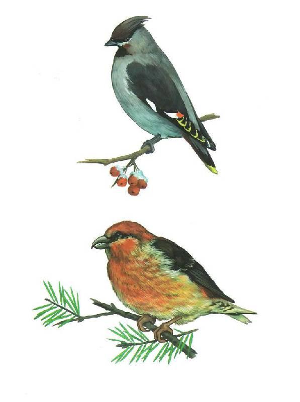 Перелетные и зимующие птицы россии