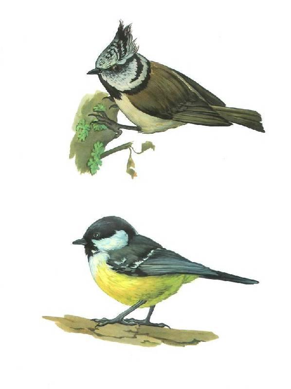 Эта картинка вы увидете в архивах: фото птиц из мультиков