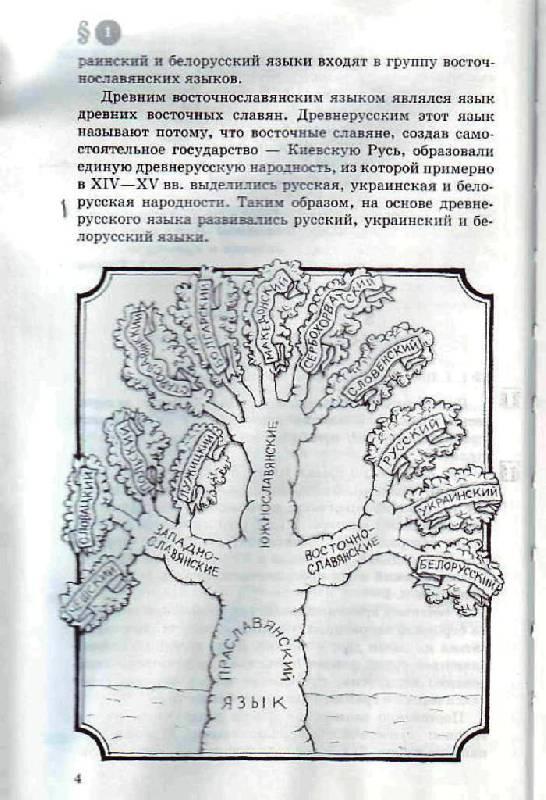 Иллюстрация 4 к книге русский язык 8