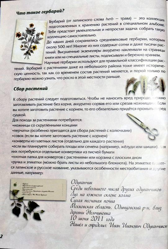 Иллюстрация 1 из 15 для Иллюстрированный гербарий - Маневич, Маневич | Лабиринт - книги. Источник: Ассоль