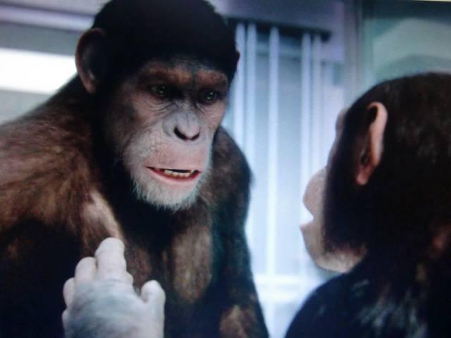 Иллюстрация 1 из 15 для Восстание планеты обезьян (DVD) - Руперт Уайт   Лабиринт - видео. Источник: Лимпи