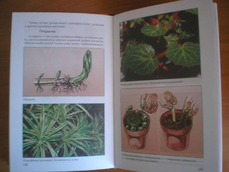 Иллюстрация 1 из 11 для Размножение растений - Т.В. Алдохина   Лабиринт - книги. Источник: Тарасенко  Екатерина Сергеевна