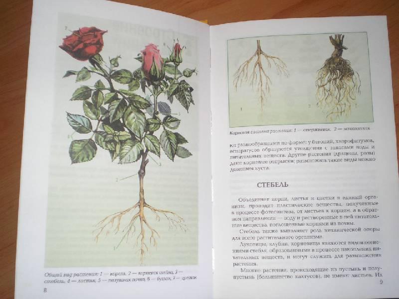 Иллюстрация 1 из 2 для Уход за растениями - С.И. Петренко | Лабиринт - книги. Источник: Тарасенко  Екатерина Сергеевна