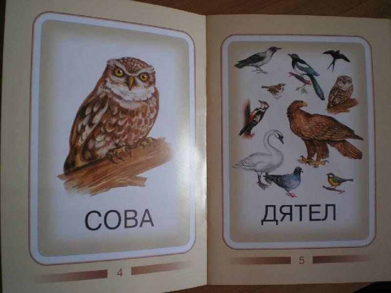 Книжки малышки про птиц