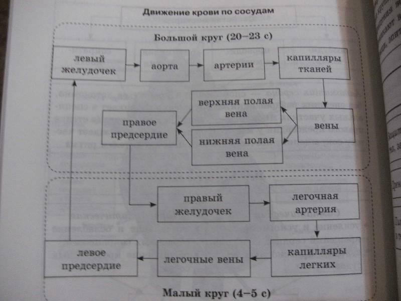 Биология В Таблицах И Схемах Скачать Бесплатно