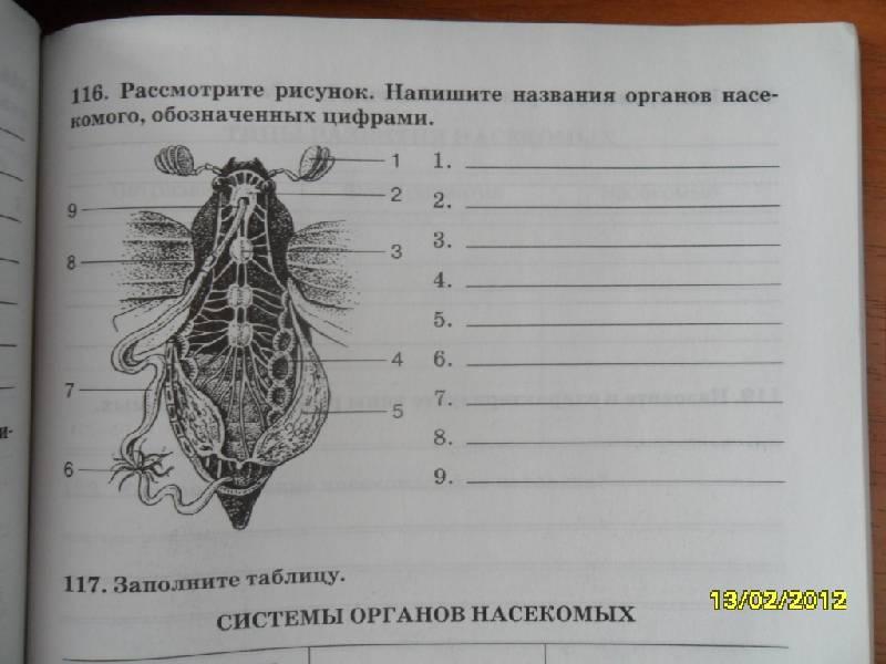 Из 21 для биология многообразие живых