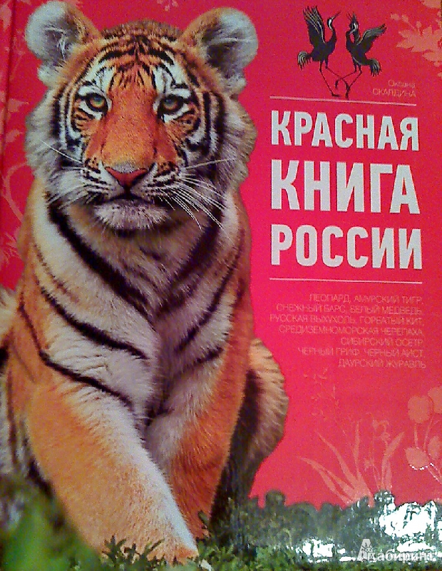 Красная книга россии животные в картинках с названиями 16
