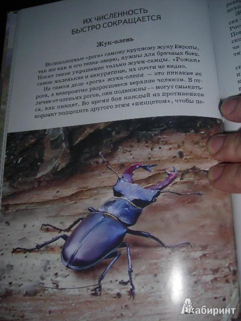 16 для животные из красной книги россии