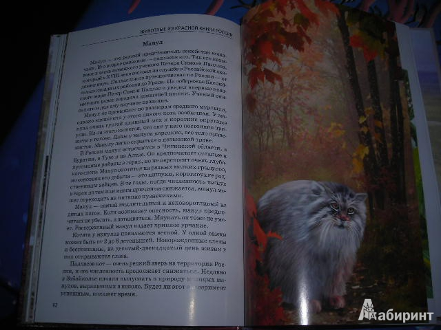16 для книги животные из красной книги