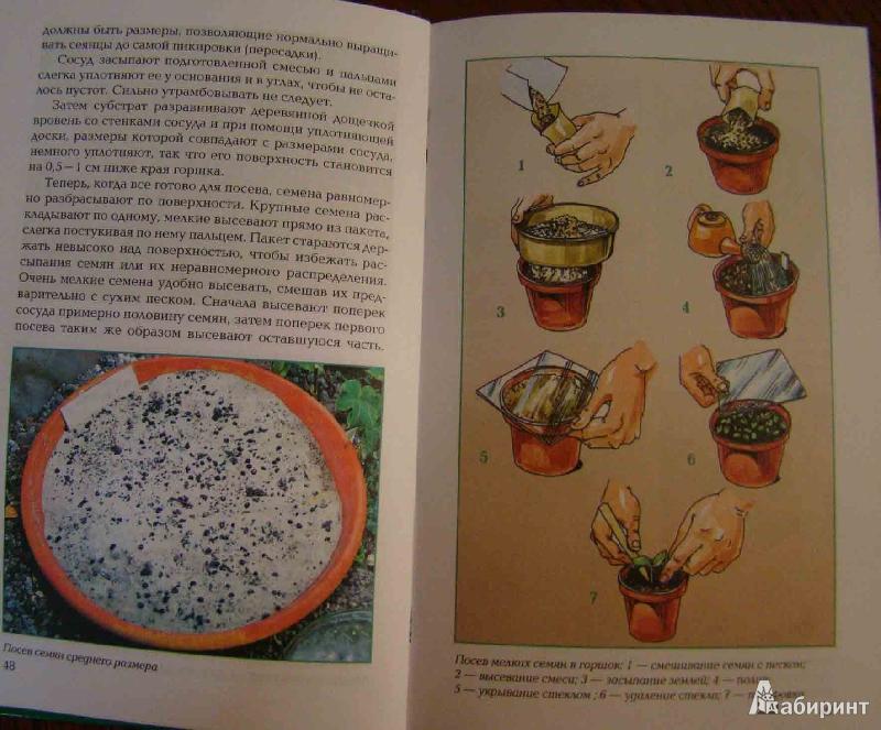 Пятая иллюстрация к книге размножение