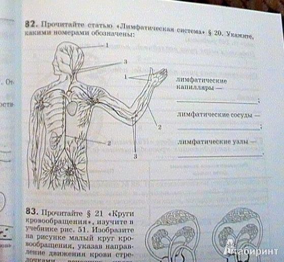 Для биология человек 8 класс рабочая