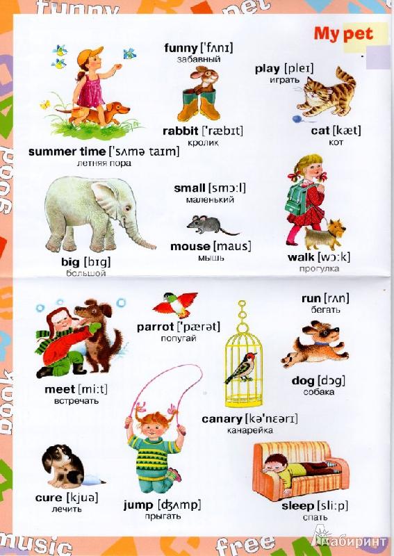Английские рассказы о животных с вопросами и заданиями