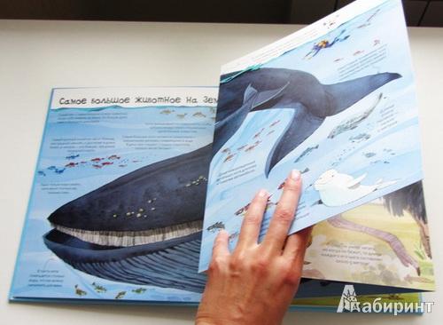 Картинки животных для детей 4 лет