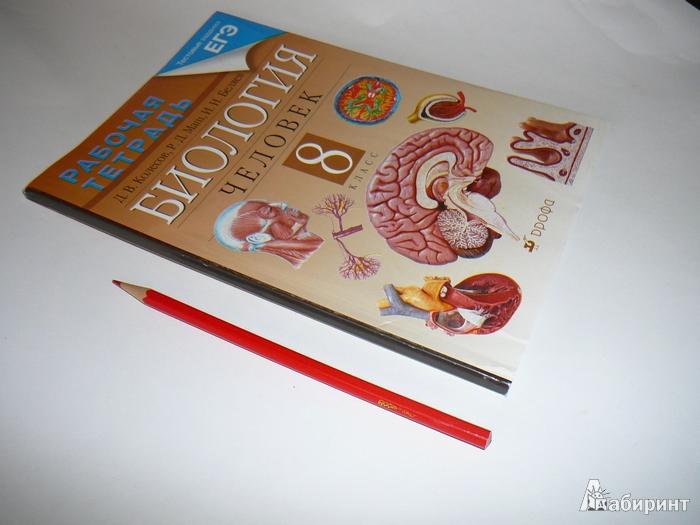 31 для книги биология человек 8 класс
