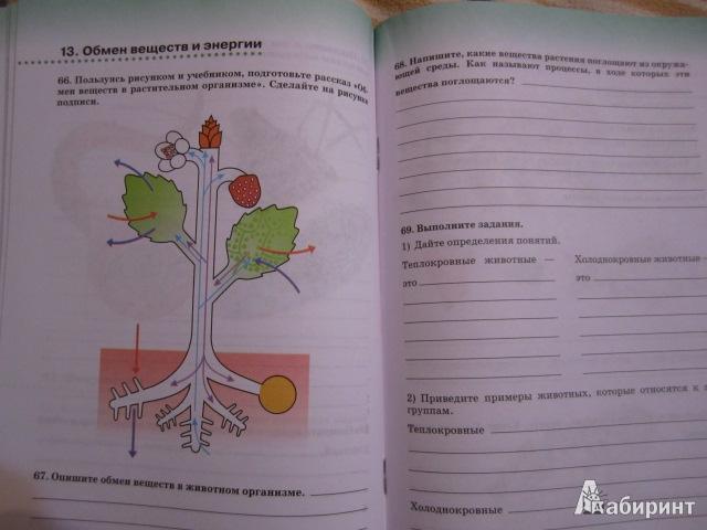 Организм 6 класс рабочая тетрадь