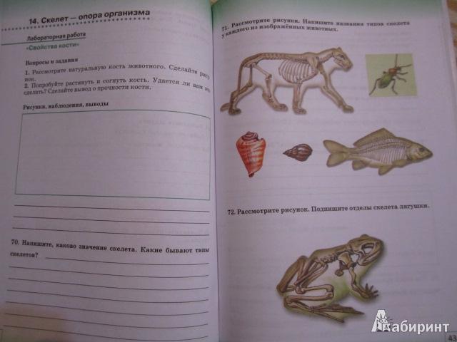 Иллюстрация 5 из 32 для биология живой
