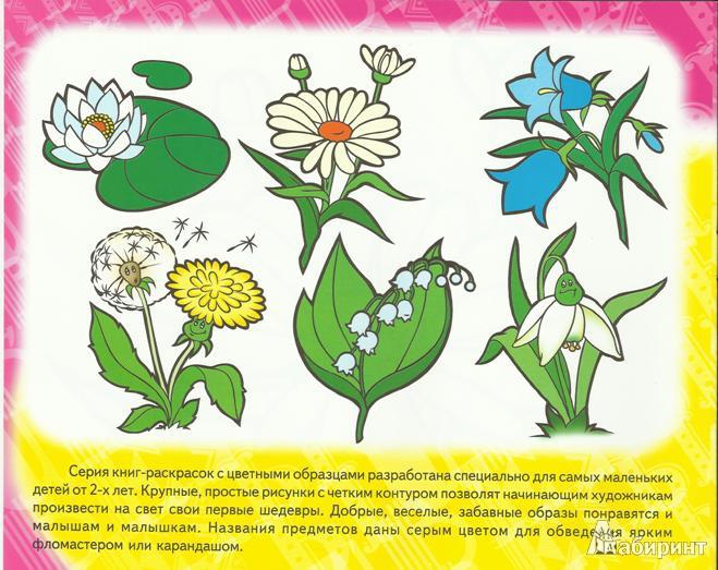 Из 10 для книги забавные полевые цветы