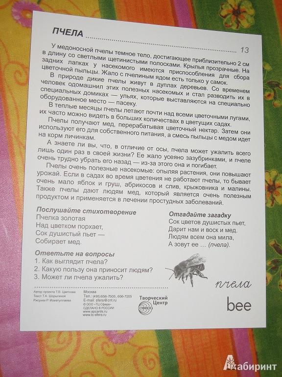 растительный и животный мир в россии картинки