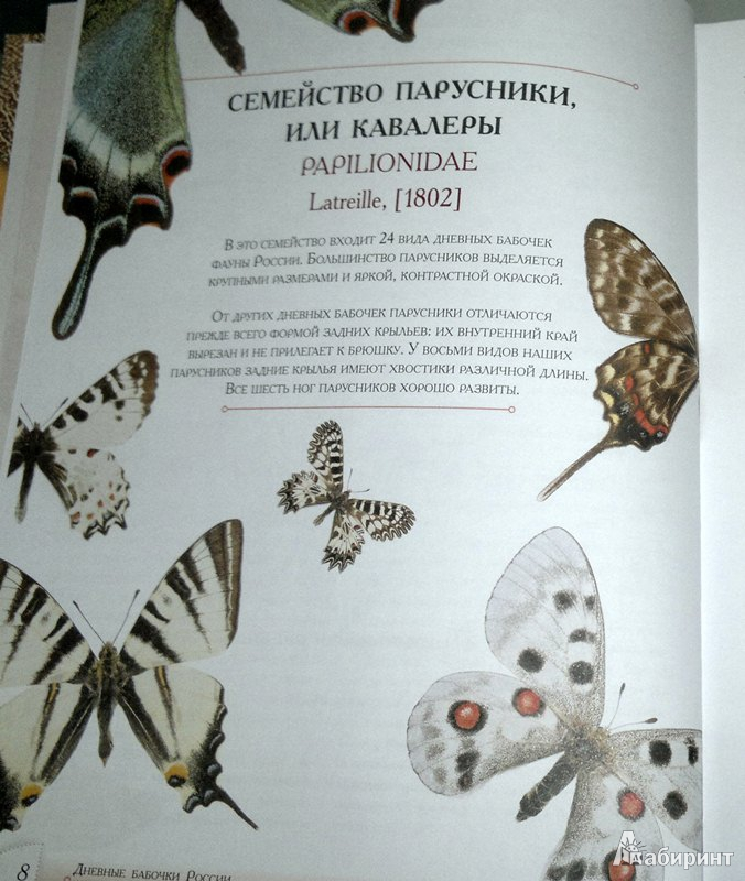 Для книги определитель бабочек россии