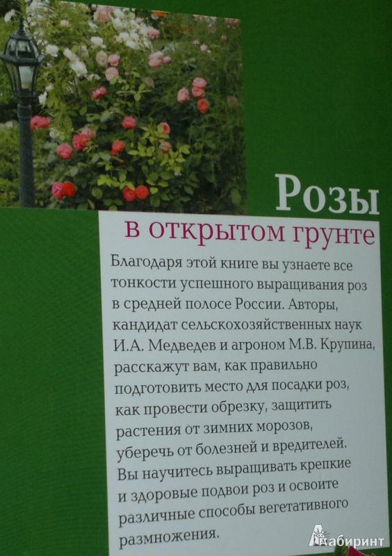 Книга о размножении роз
