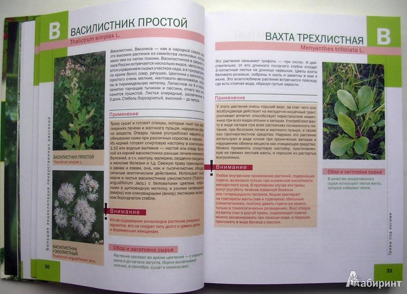 Энциклопедия лекарственных растений с