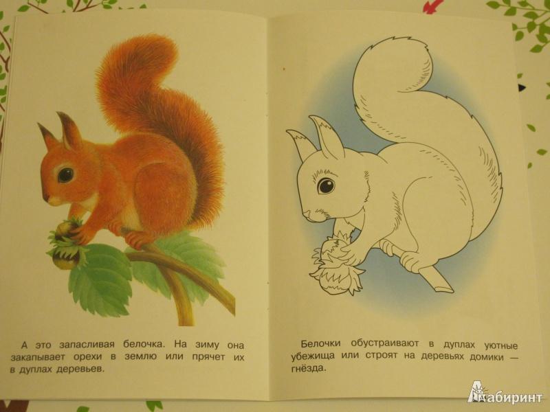 """Иллюстрация 1 из 26 для Раскраска """"Лесные животные""""   Лабиринт - книги. Источник: Theory"""