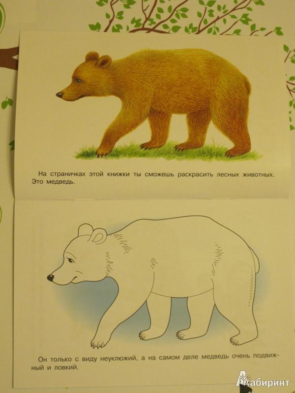 Для книги раскраска лесные животные