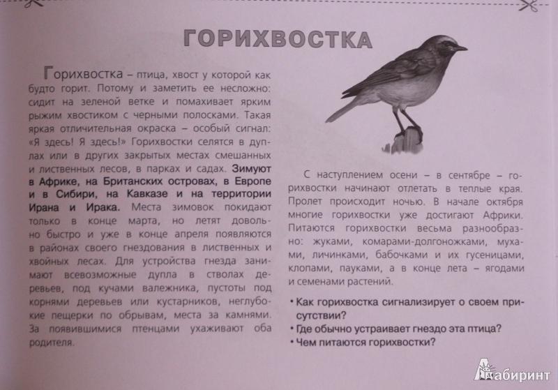 знакомство детей с зимующими и перелетными птицами