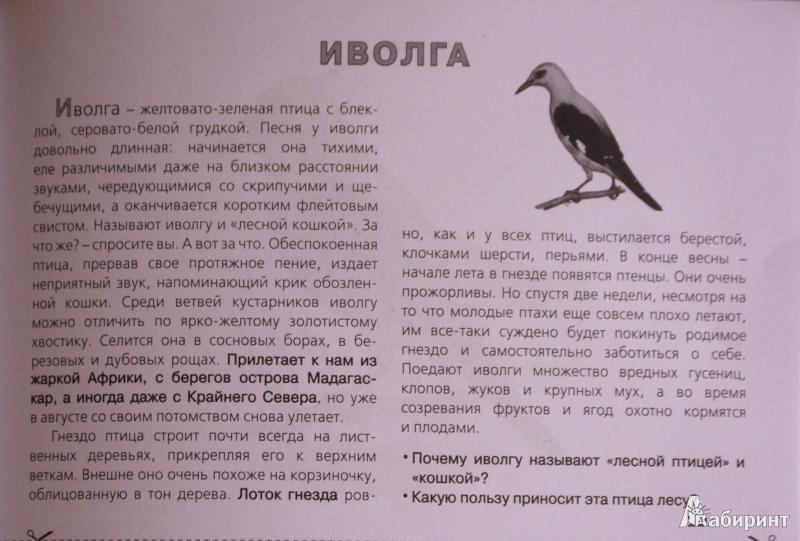 Зимующие птицы картинки из книги