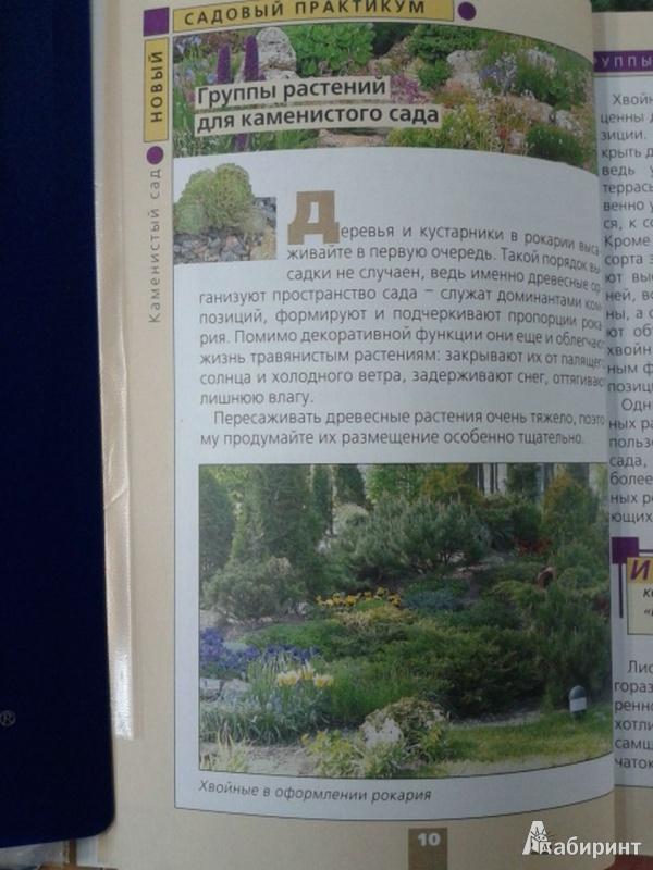 Иллюстрация 1 из 29 для Каменистый сад - Юрий Марковский   Лабиринт - книги. Источник: Тарасенко  Екатерина Сергеевна