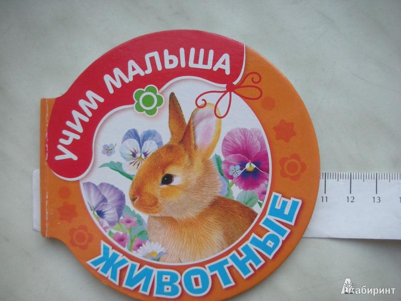 Иллюстрация 1 из 14 для Животные | Лабиринт - книги. Источник: Екатерина123