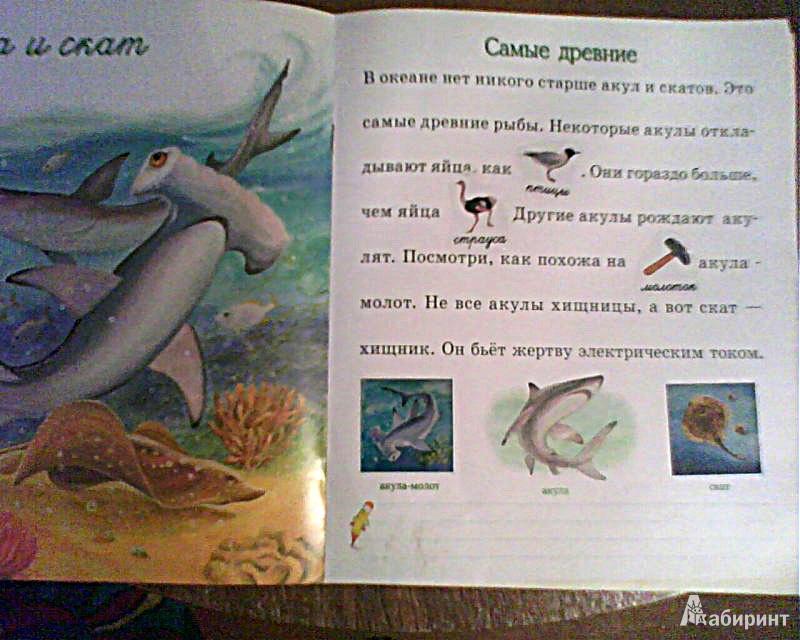 Иллюстрация 1 из 3 для Морские животные. Моя первая энциклопедия с наклейками - Александрова, Дроздова   Лабиринт - книги. Источник: ealaz