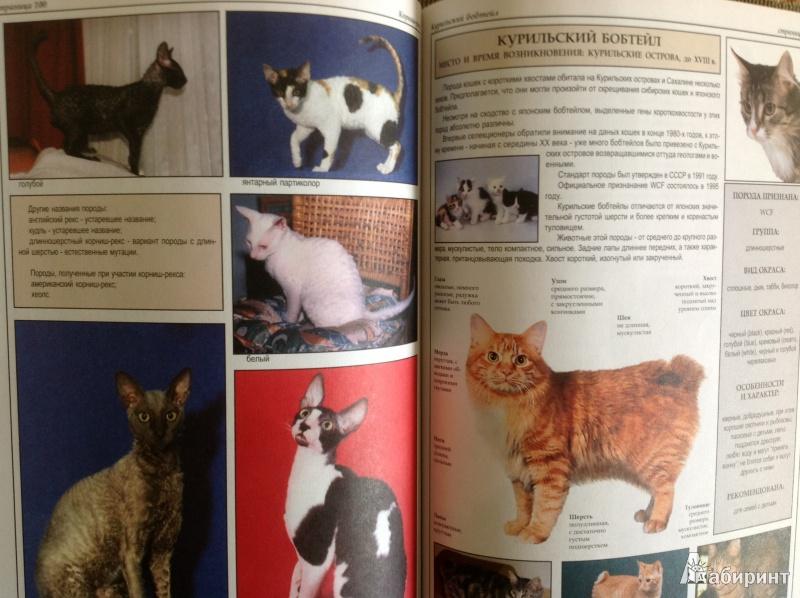 Иллюстрация 1 из 40 для Все о породах кошек - Джульетта Мей | Лабиринт - книги. Источник: Потапова  Olga