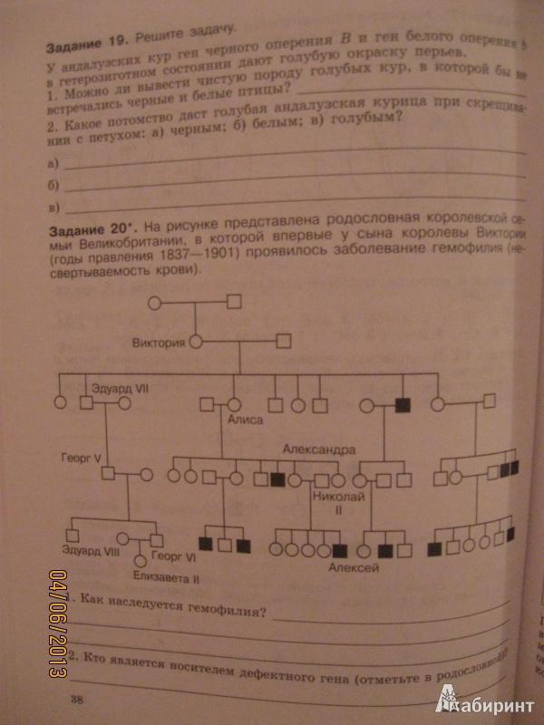 Общая биология рабочая тетрадь