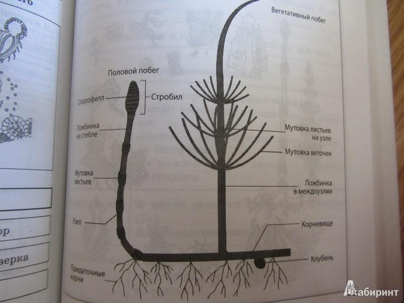 16 для Биология в схемах и