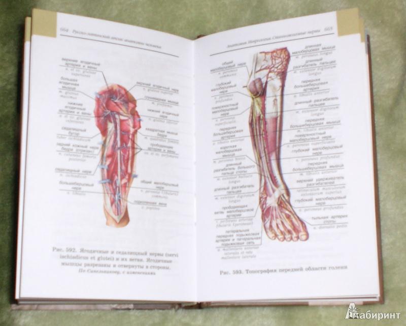 Билич анатомия человека