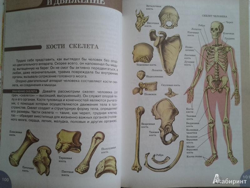 Биология 8 Класс Учебник Сонин Читать