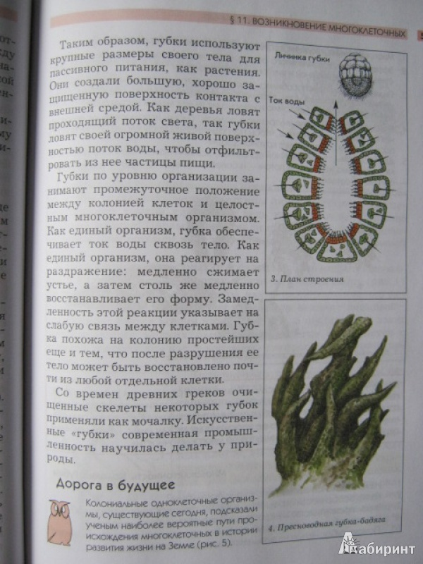 Пятая иллюстрация к книге биология от