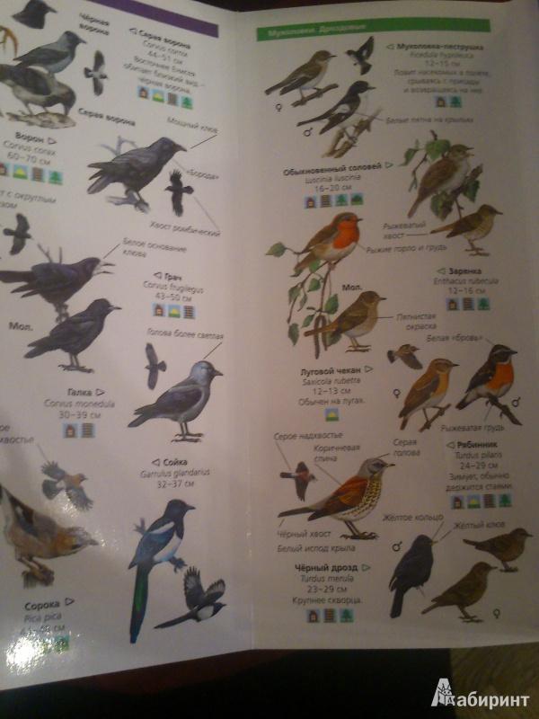 Легкое любителя птиц