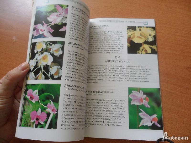 Иллюстрация 1 из 34 для Орхидеи - Коломейцева, Герасимов | Лабиринт - книги. Источник: юлия д.