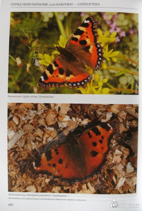 26 из 34 для насекомые европейской части
