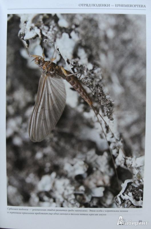 21 из 34 для насекомые европейской части