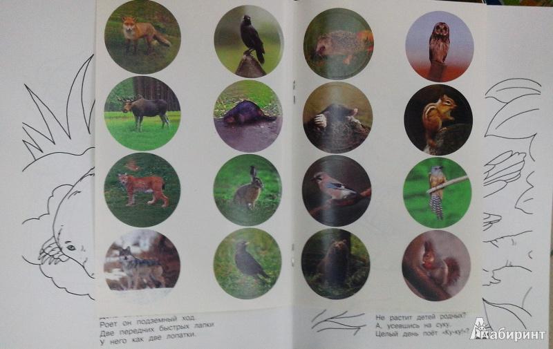 Иллюстрация 1 из 4 для Лесные загадки - Владимир Степанов   Лабиринт - книги. Источник: Ю  Елена