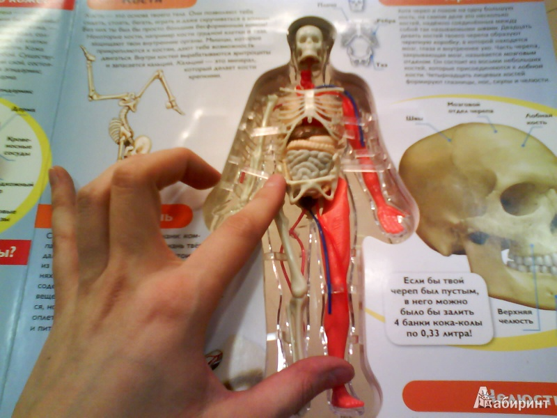 Encyclopedia of human anatomy