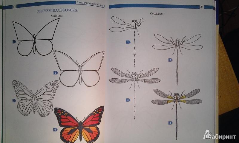 Учебник по рисованию для начинающих