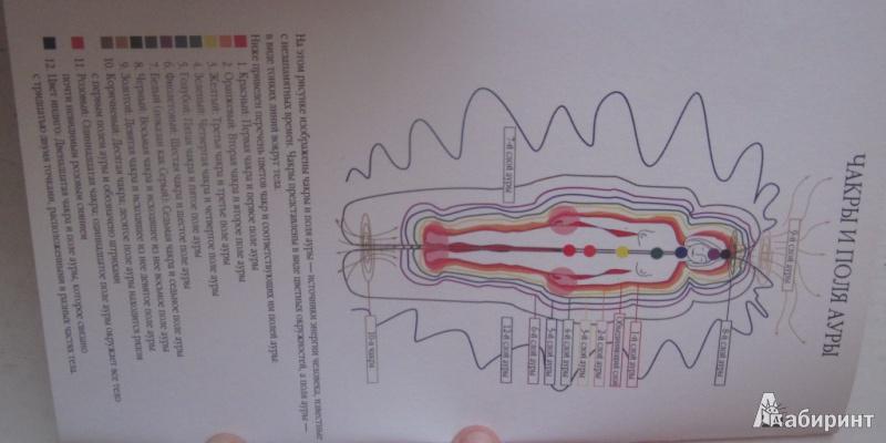 Иллюстрация 1 из 9 для Совершенствуем тело при помощи чакр - Синди Дэйл | Лабиринт - книги. Источник: товарищ маузер